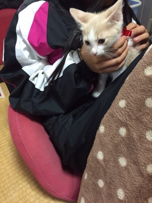 きなこちゃん_3485