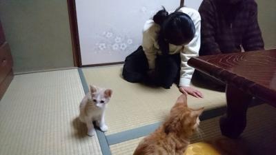 きなこちゃん_5381