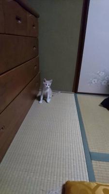 きなこちゃん_7013