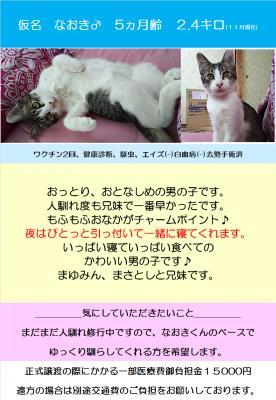 なおきポスター