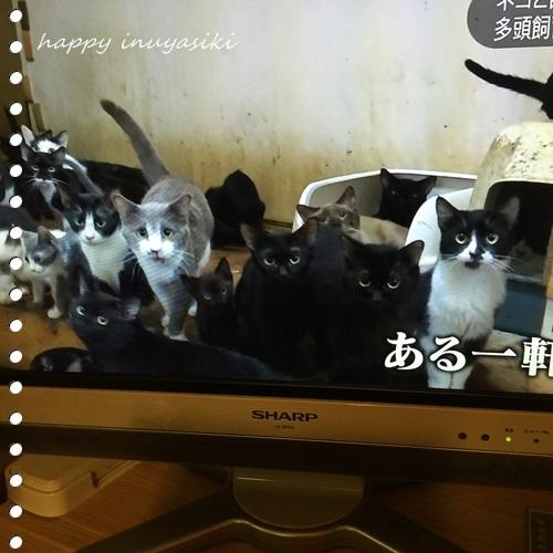 mini16IMG_0546-20161117.jpg