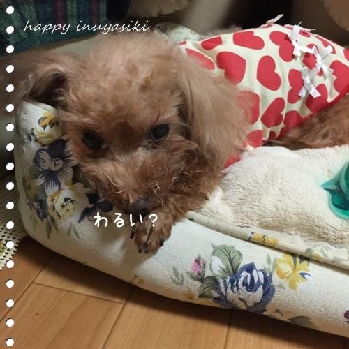 mini16IMG_0550-20161117.jpg