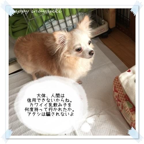 mini16IMG_3493-20161212.jpg