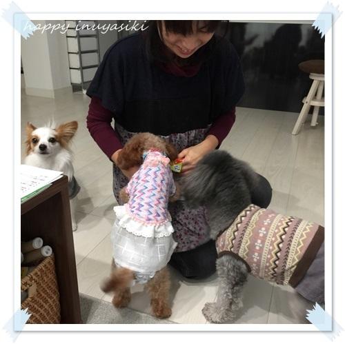 mini16IMG_3781-20161214.jpg
