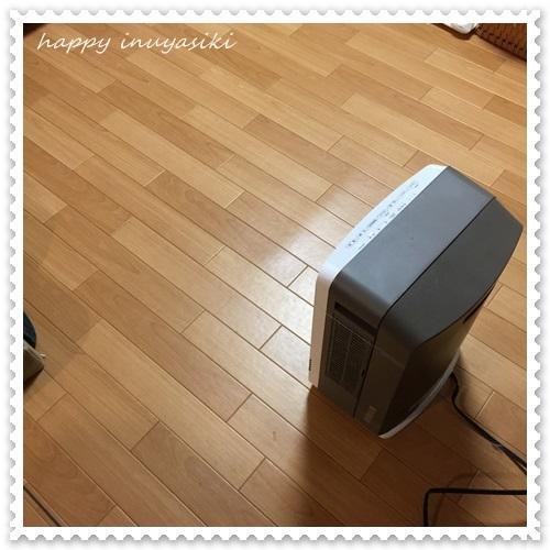 mini16IMG_4902-20161229.jpg