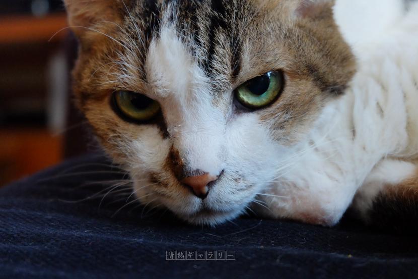 161031_cat.jpg