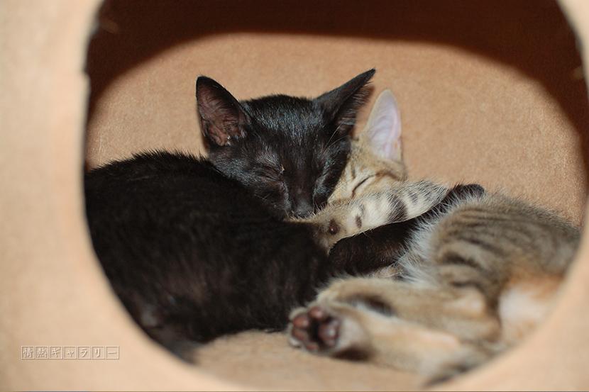 161125_cat1.jpg