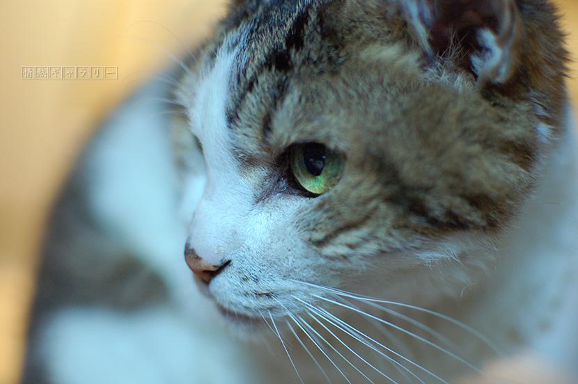 161125_cat2.jpg