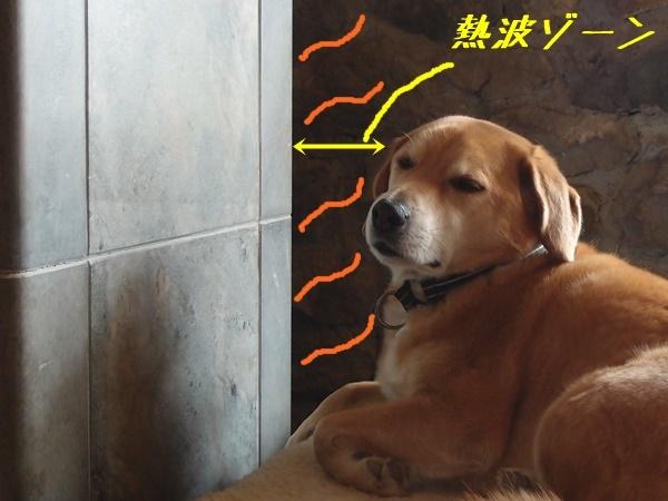 見えない熱波ゾーンが見える犬