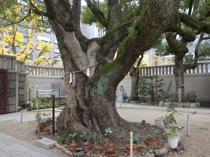 難波神社保存樹s