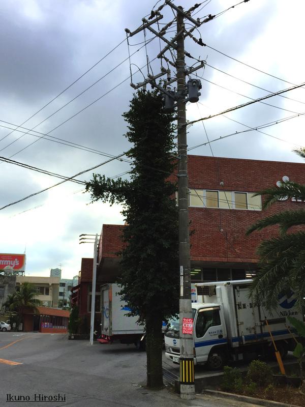 電信柱の木