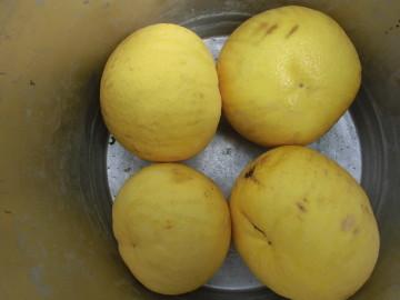 柑橘いろいろ収穫保存9