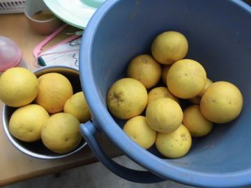 柑橘いろいろ収穫保存11