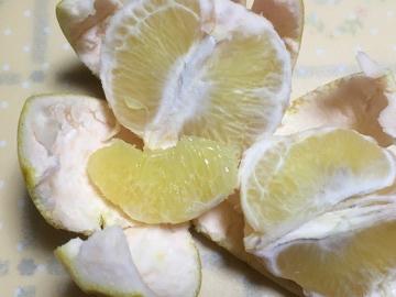 柑橘いろいろ収穫保存12