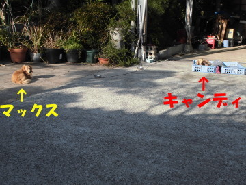 堆肥置き場を2
