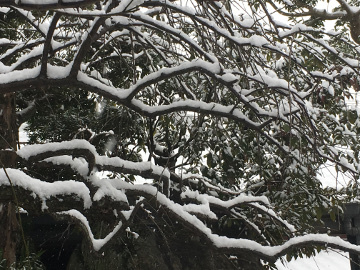 雪がボッコリ