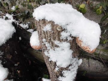 雪がボッコリ6