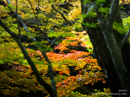 鹿又川渓谷 [平成28年11月9日(水)更新]10