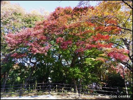 松ヶ岡公園 (12)