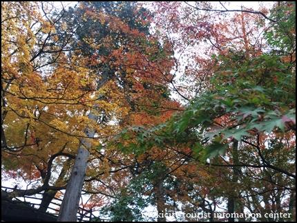 松ヶ岡公園 (3)