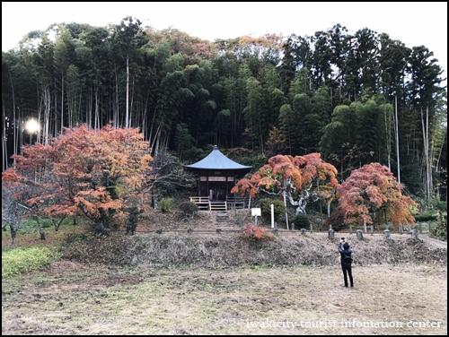 201611123中釜戸のシダレモミジ