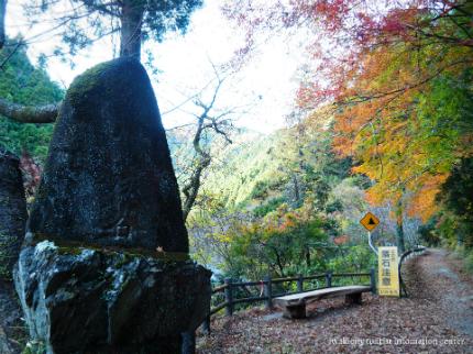 紅葉情報2016 龍神峡 [平成28年11月26日(土)更新]15