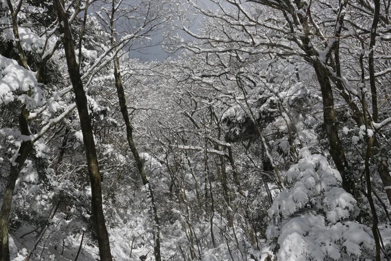 s-難所ヶ滝17.1.24 040