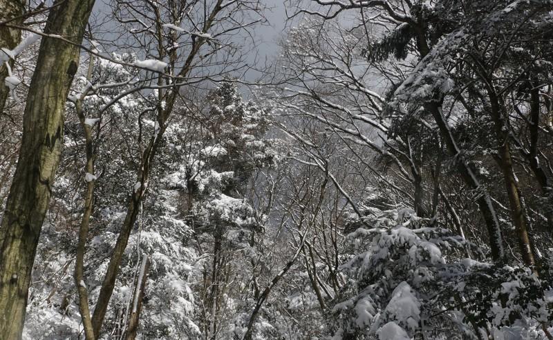 s-難所ヶ滝17.1.24 036