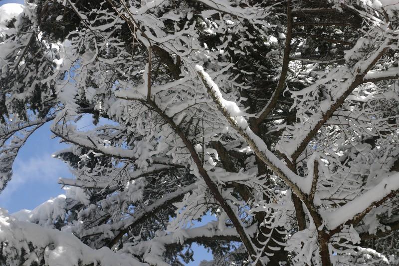 s-難所ヶ滝17.1.24 068