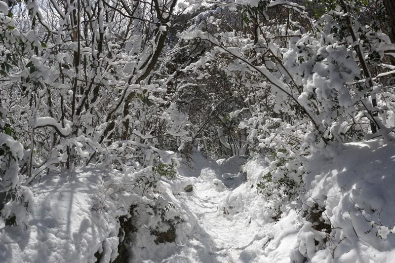 s-難所ヶ滝17.1.24 064