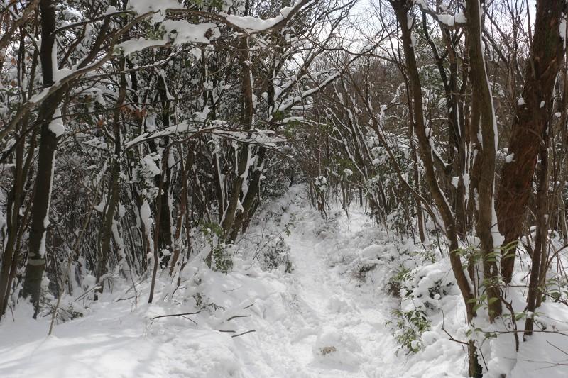 s-難所ヶ滝17.1.24 062