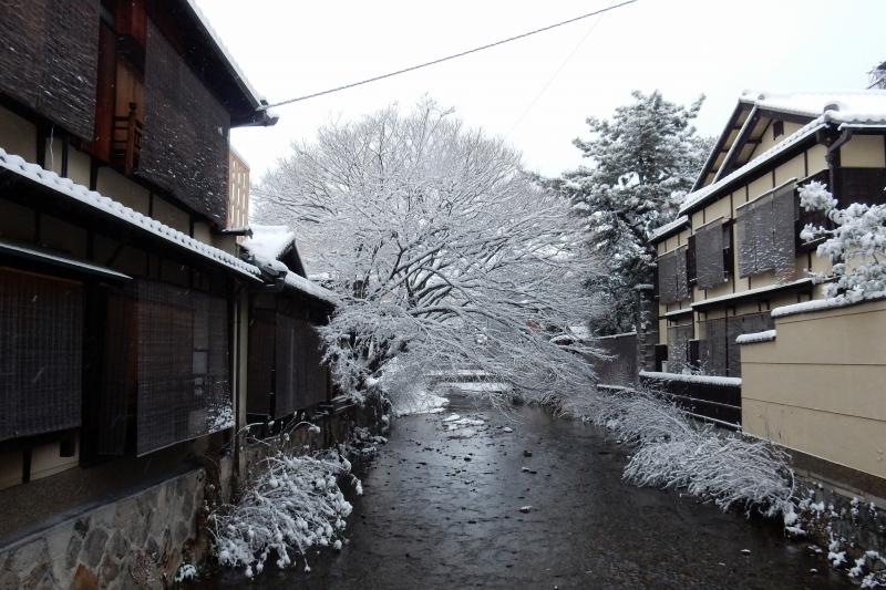 雪京都 146