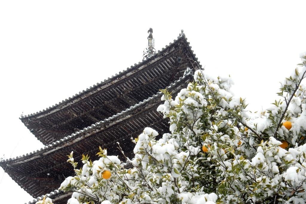 雪京都 366
