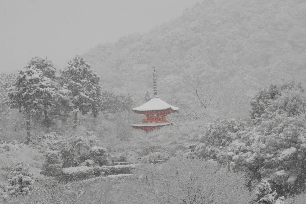 雪京都 281