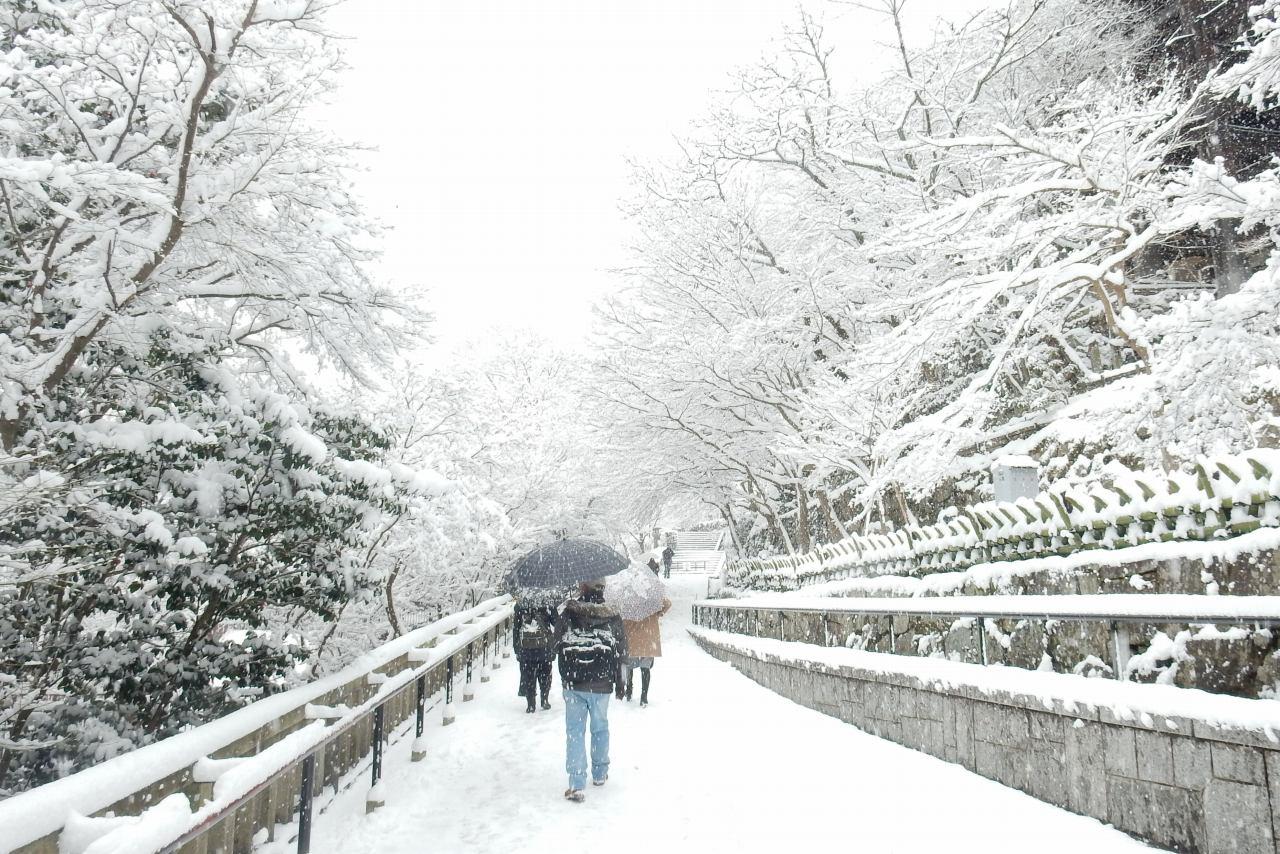 雪京都 334