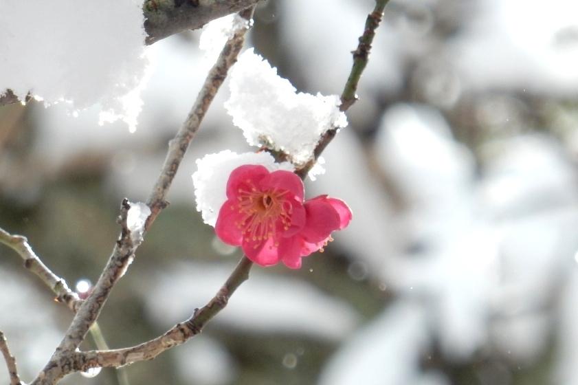 雪京都 606