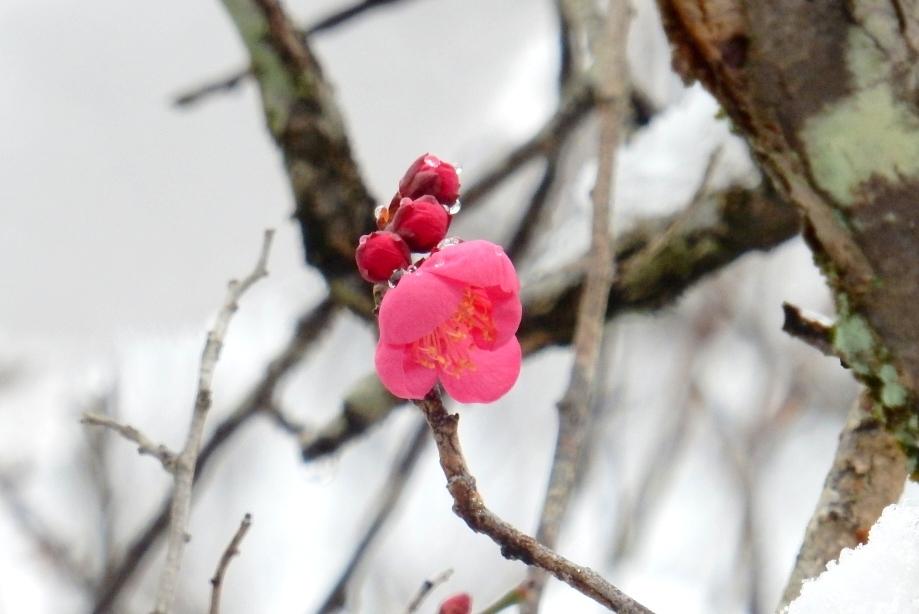 雪京都 617