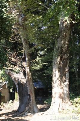 氷川神社(上尾市戸崎)1