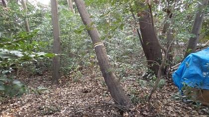 倒木の状況1