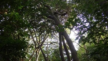 倒木の状況3