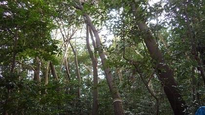 倒木の状況2