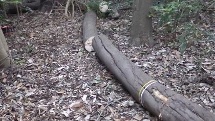 倒木の状況 玉切り