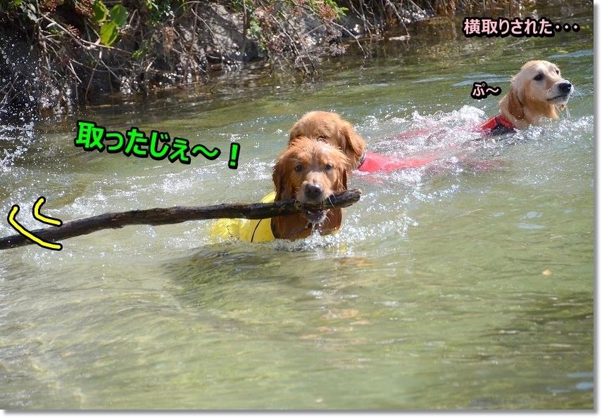 DSC_5291横取り成功♪ - コピー