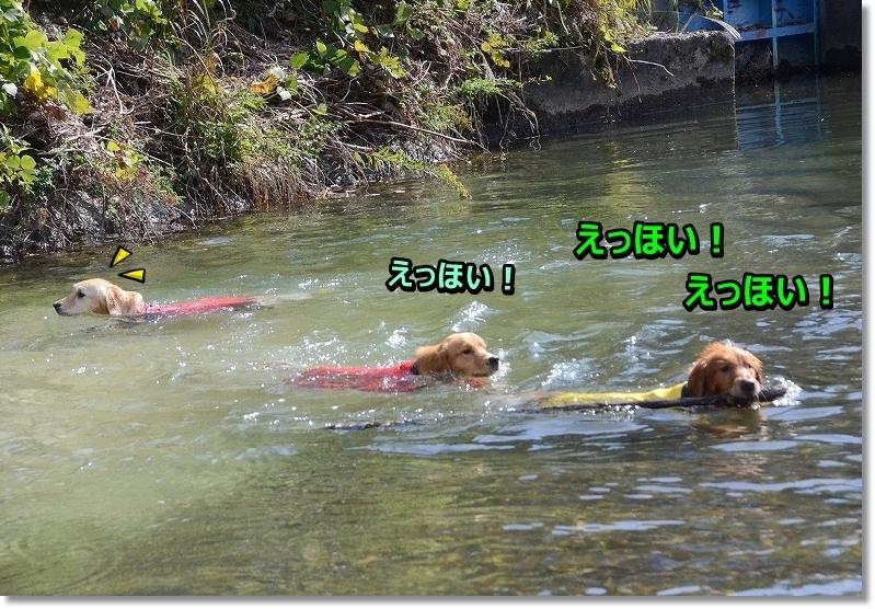 DSC_5294 しゃしゅけ~  いいもん - コピー