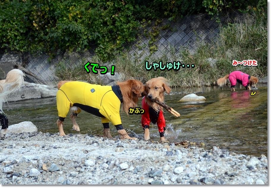 DSC_5438 くで