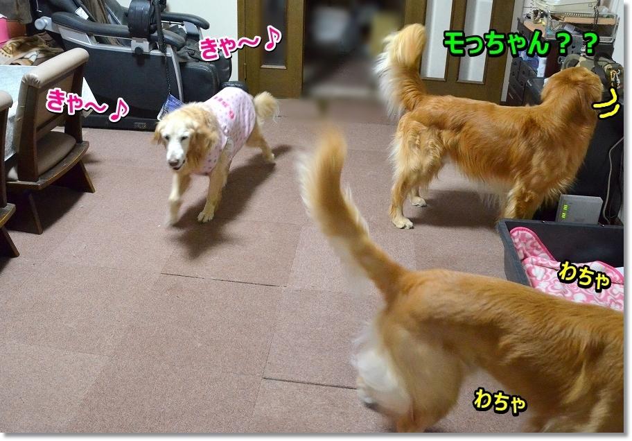 DSC_6034 きゃっ