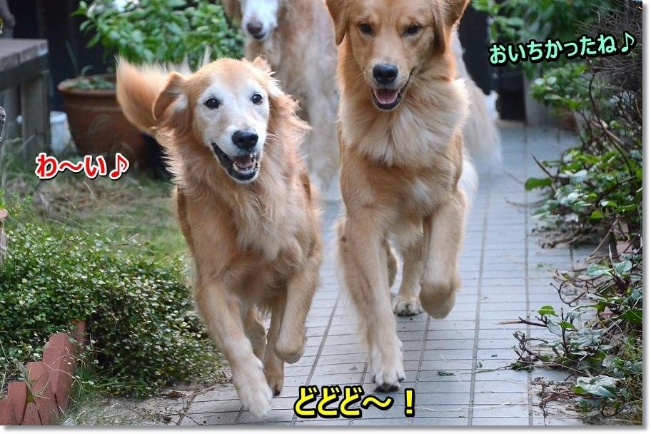 DSC_5065 どどど~