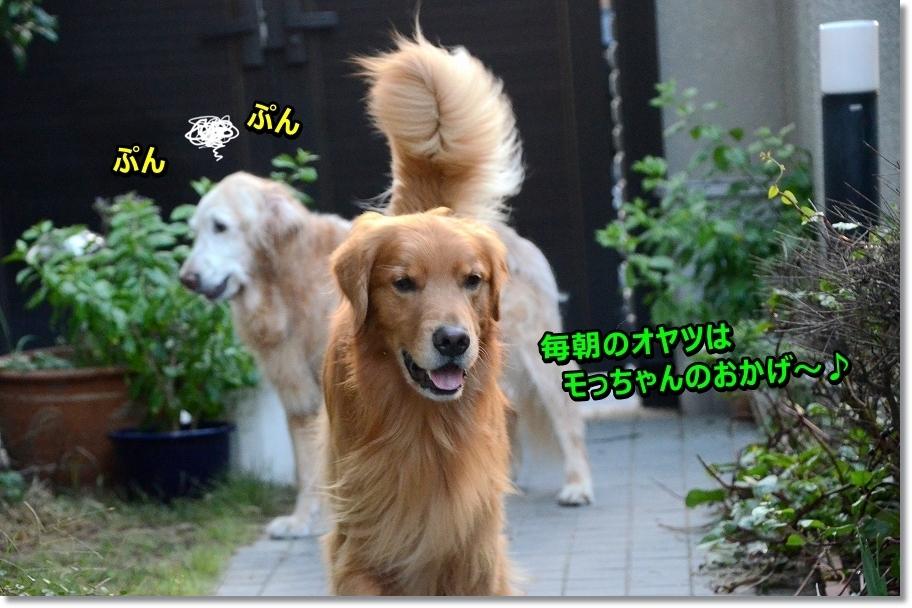 DSC_5068モっちゃんのお陰