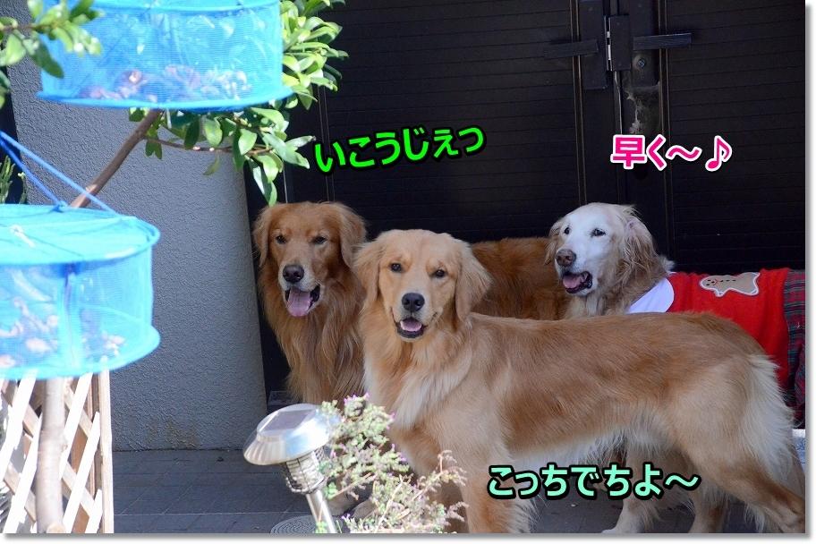 DSC_5107行こうじぇ