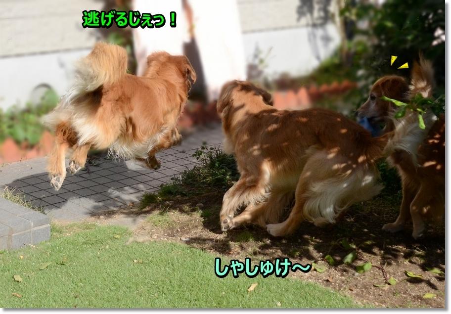 DSC_5123 しゅわっ!